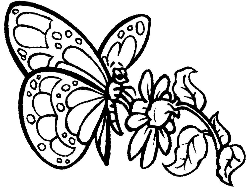 бабочка раскраска 3