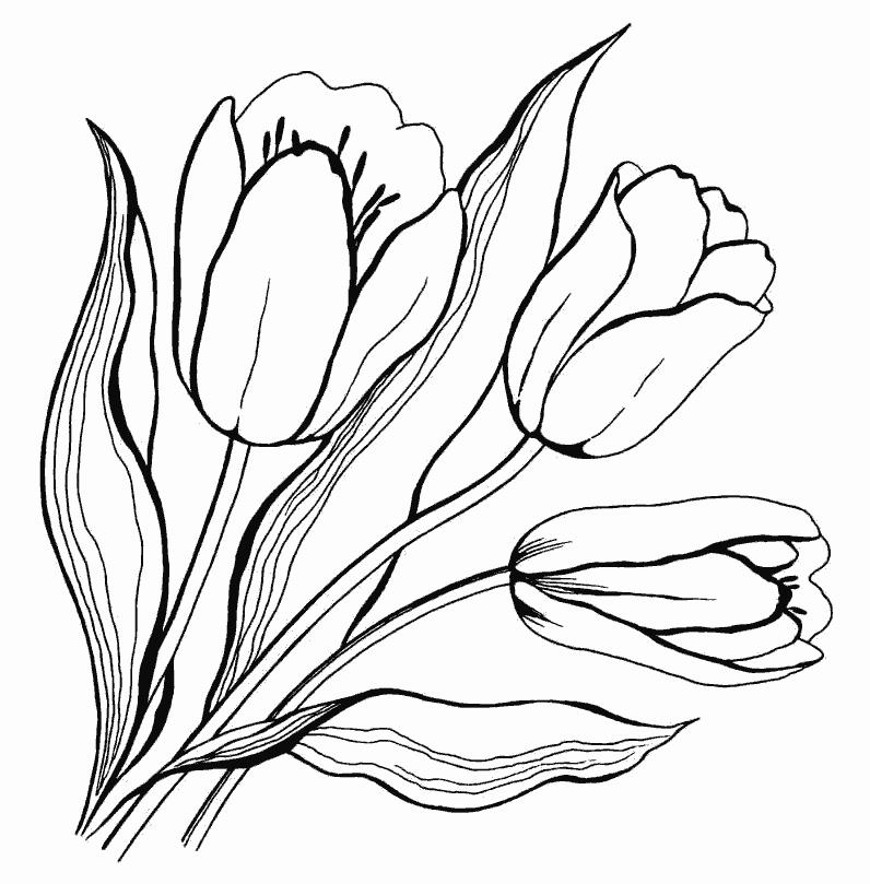 раскраска тюльпан