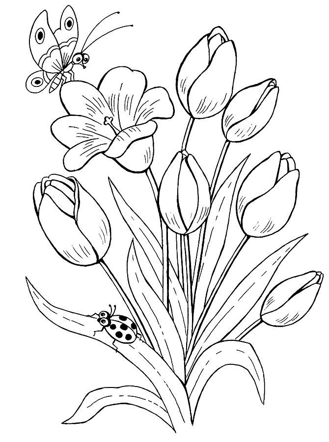 Раскраска тюльпаны 2