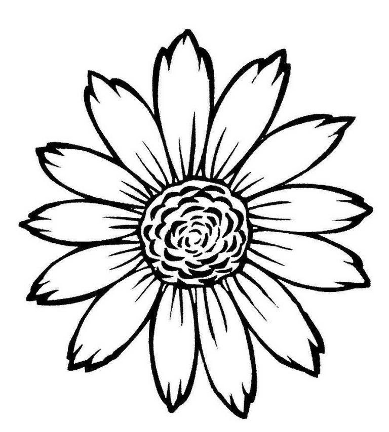 Раскраска ромашка 2