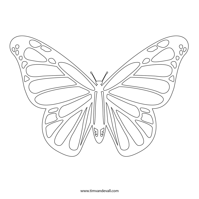 бабочка адмирал раскраска 2