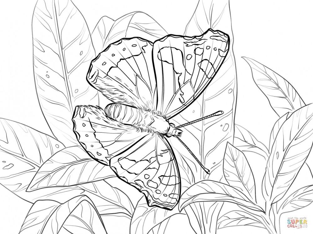 Бабочка раскраска адмирал