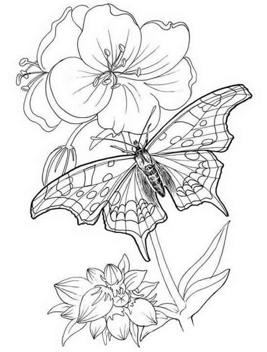 бабочка раскраска на цветке