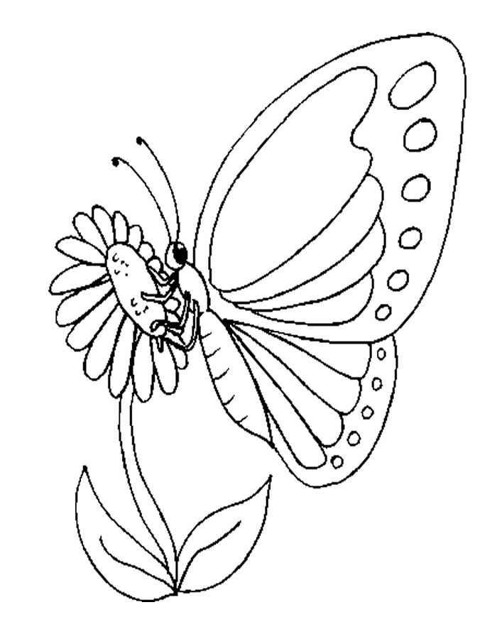 бабочка на цветке 3