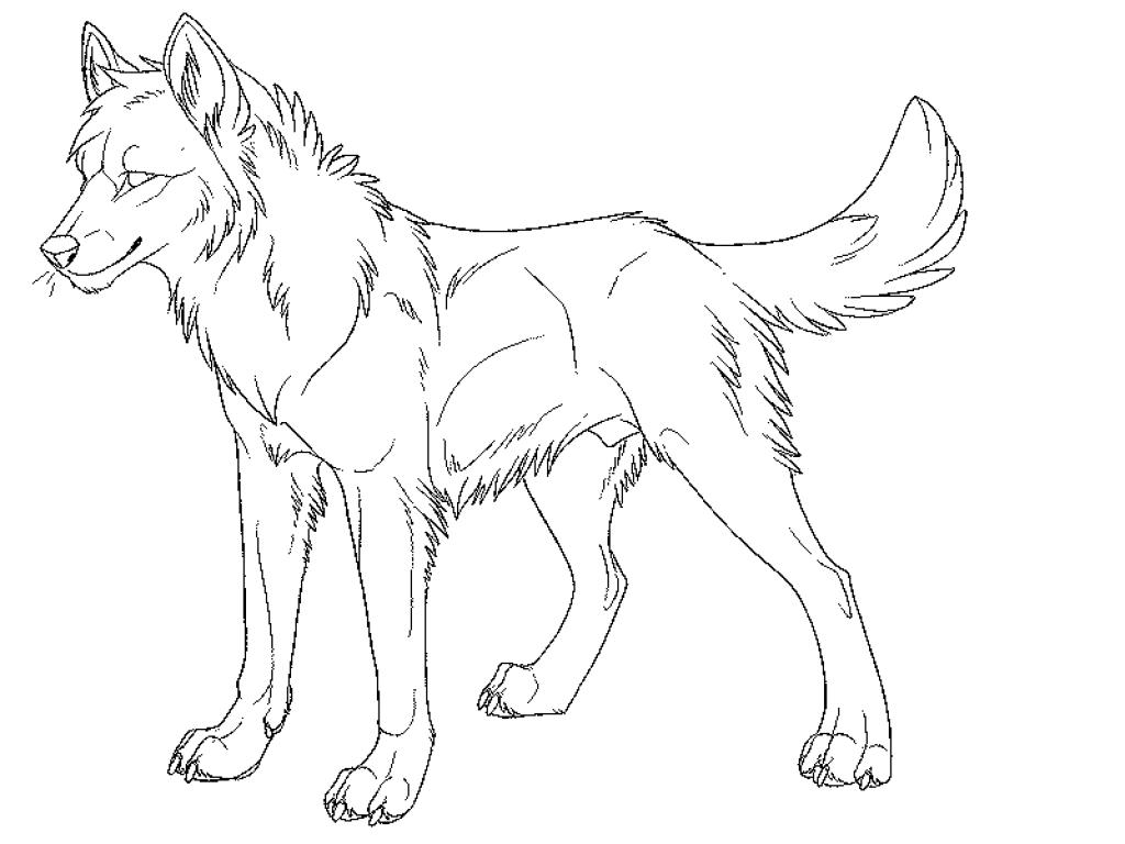 волк для раскраски 4