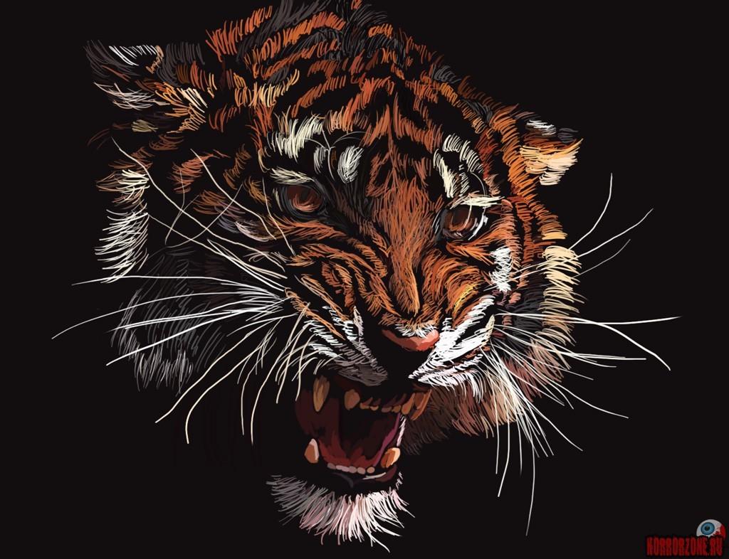 обои на телефон тигр 56