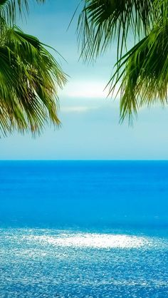 море с пальмами