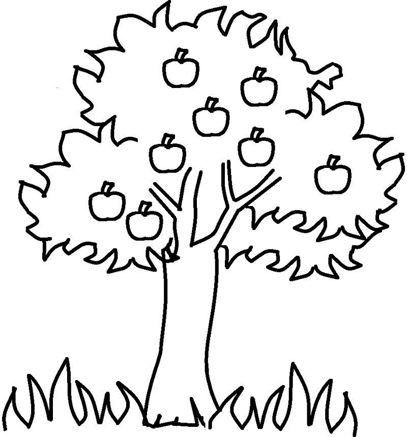 раскраска яблоня 9