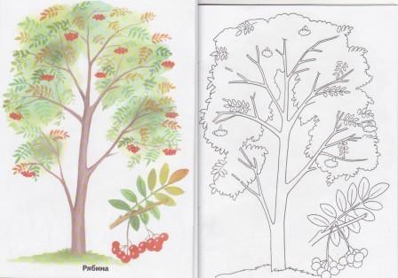 Раскраска дерево   andrey-eltsov.ru