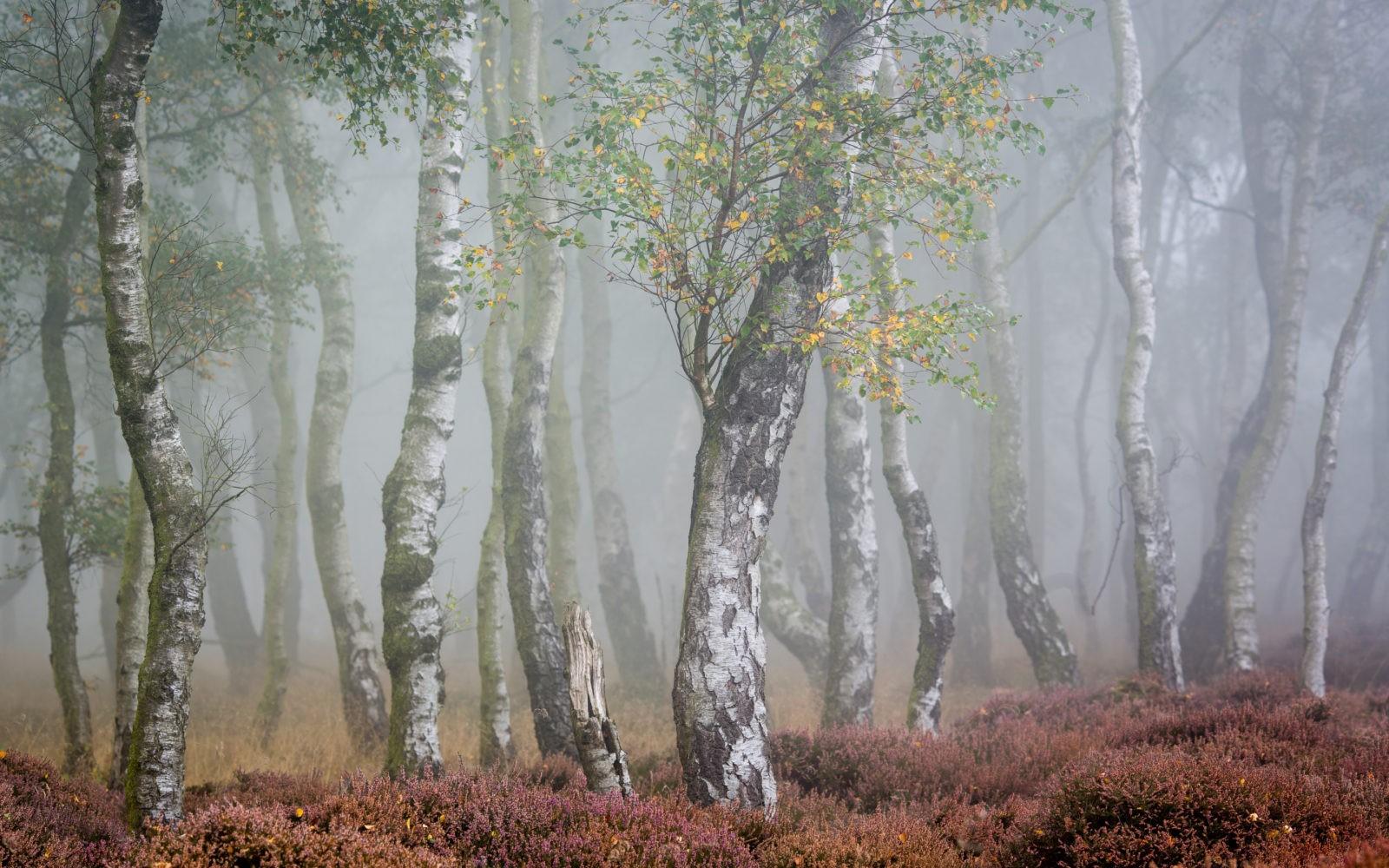 Таинственный лес 111