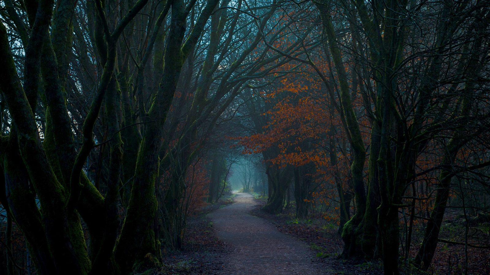 таинственный лес 444