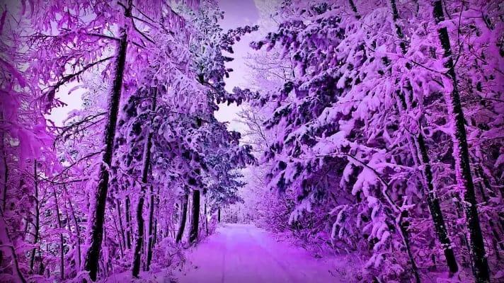 Таинственный лес 66