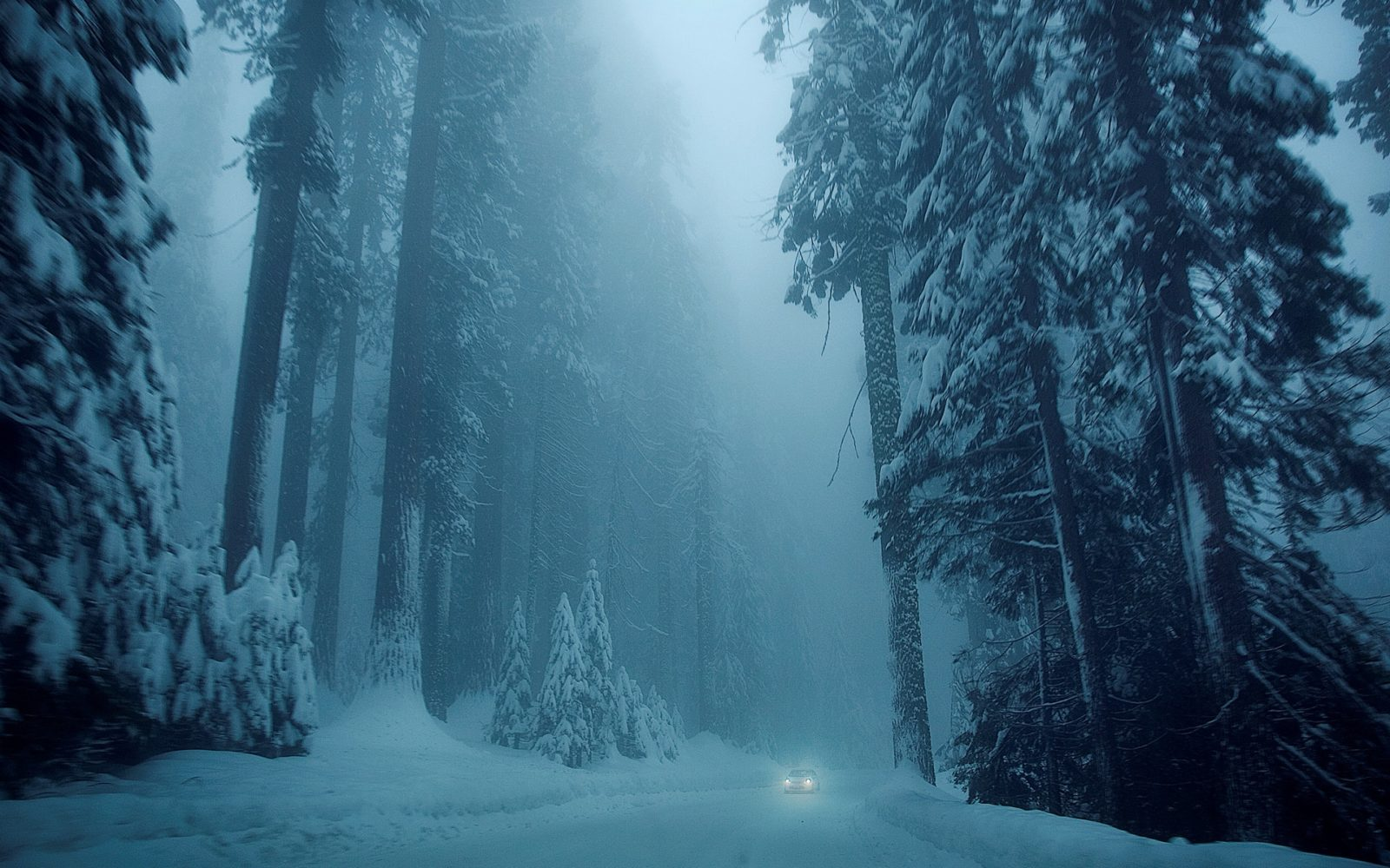 таинственный лес 333