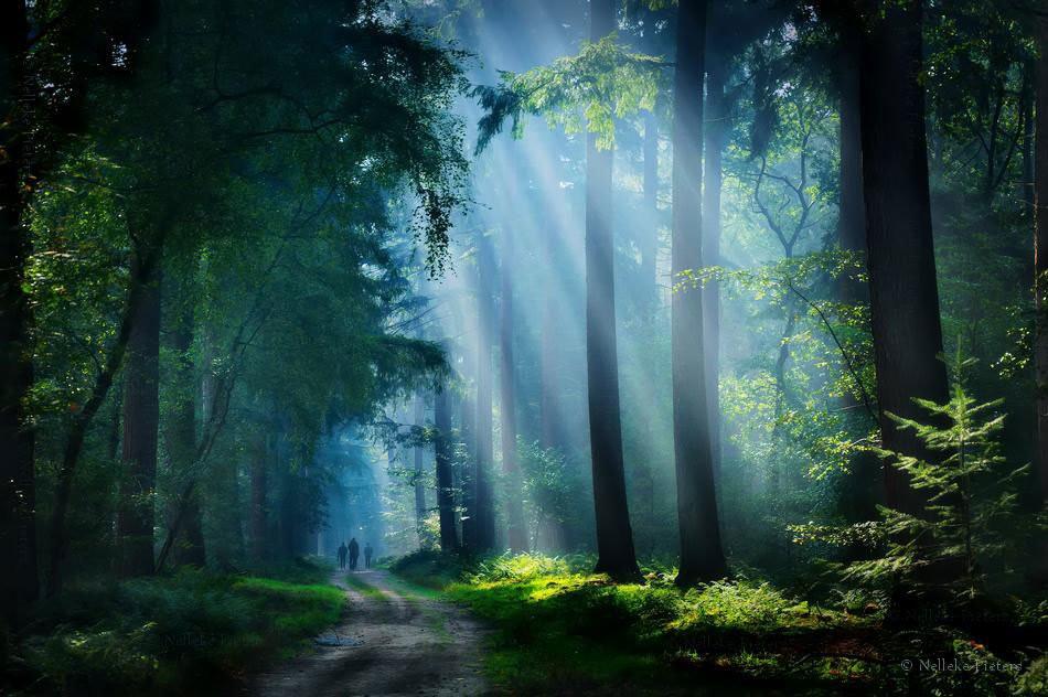 таинственный лес 88
