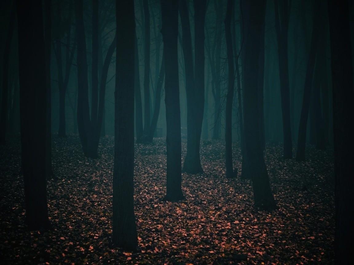 Сумрачный лес 11
