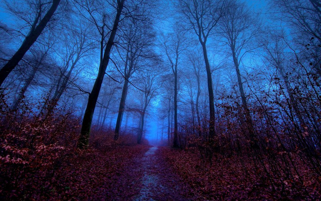 Редкий лес фото