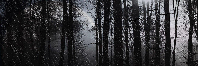 Дождливый лес