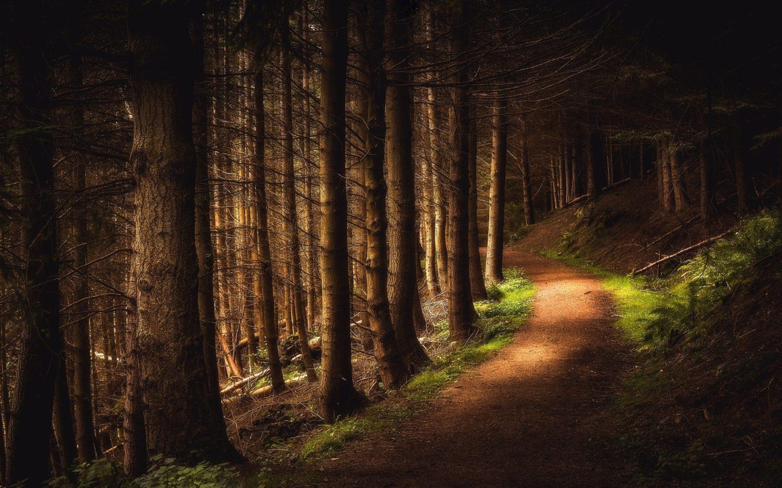 таинственный лес 909