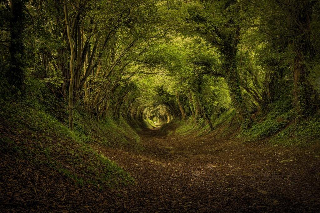 таинственный лес 555