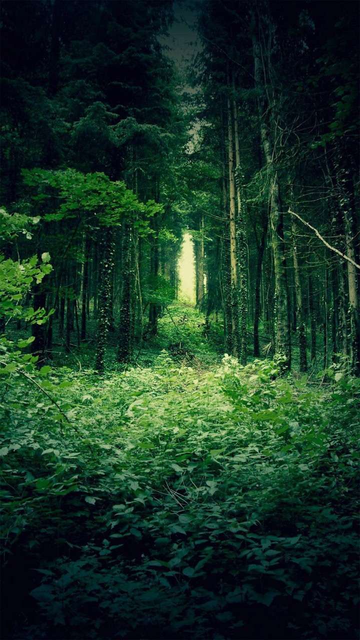обои на телефон лес 4