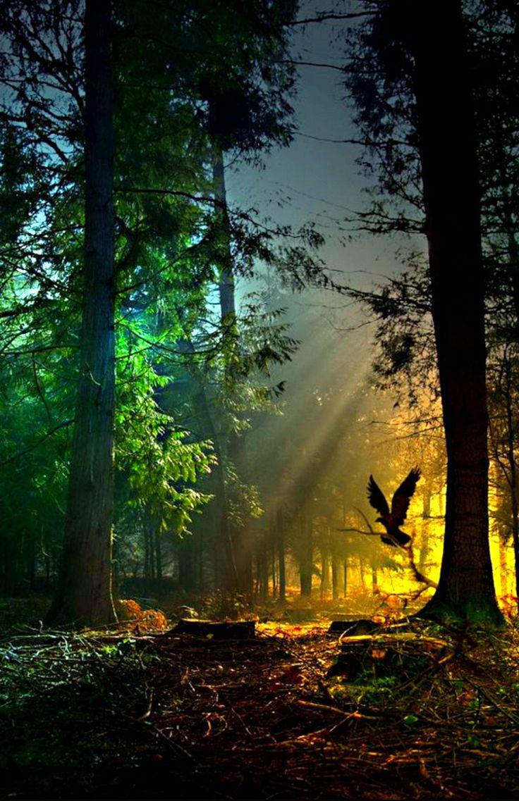 сказочный лес фото 11