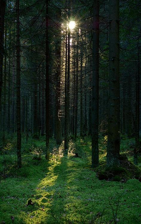 обои на телефон лес 7