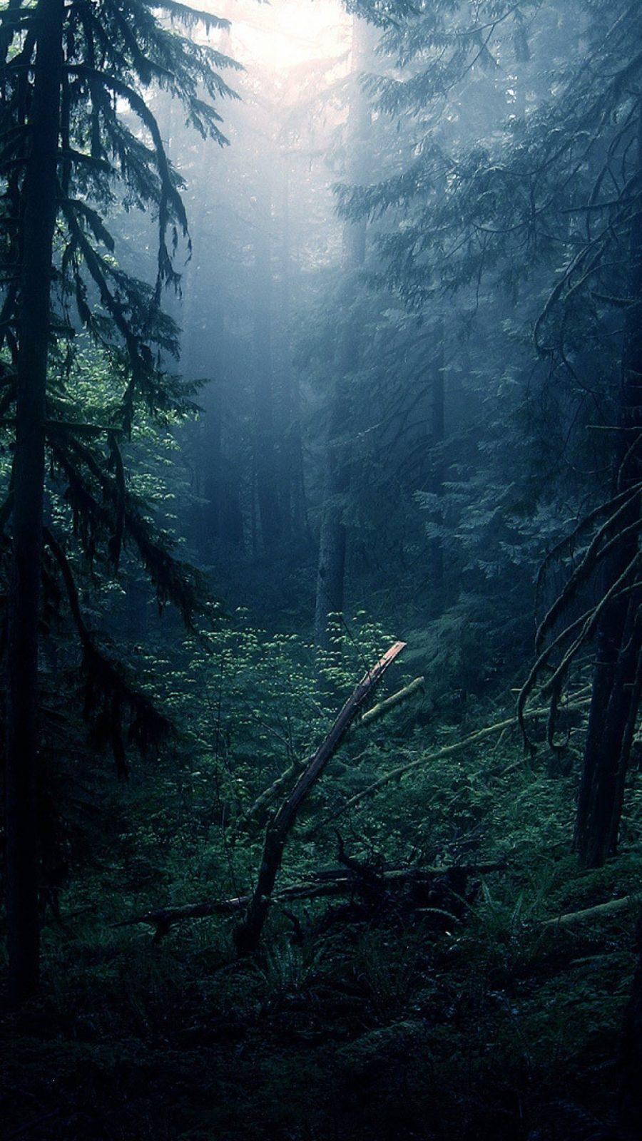 обои на телефон лес 77