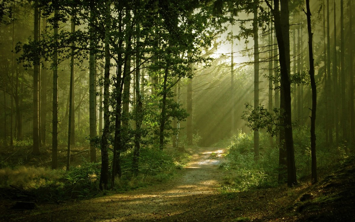 Дорожка в лесу фото