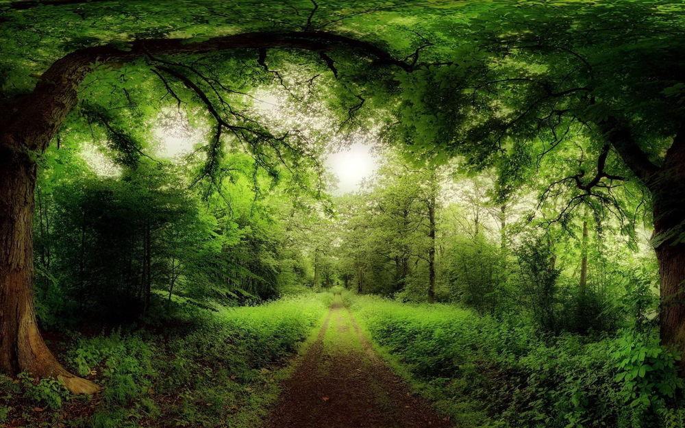 таинственный лес 666