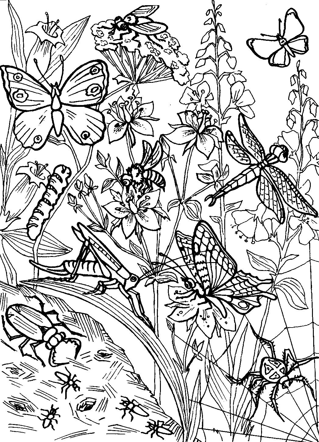 раскраска насекомые 18