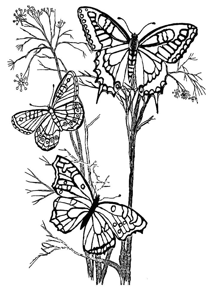 Раскраска насекомые   andrey-eltsov.ru