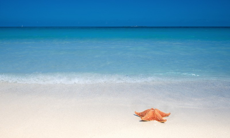 морская звезда фото
