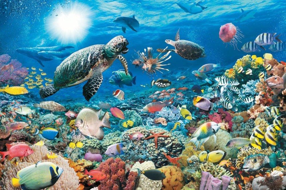 Морские черепахи фото