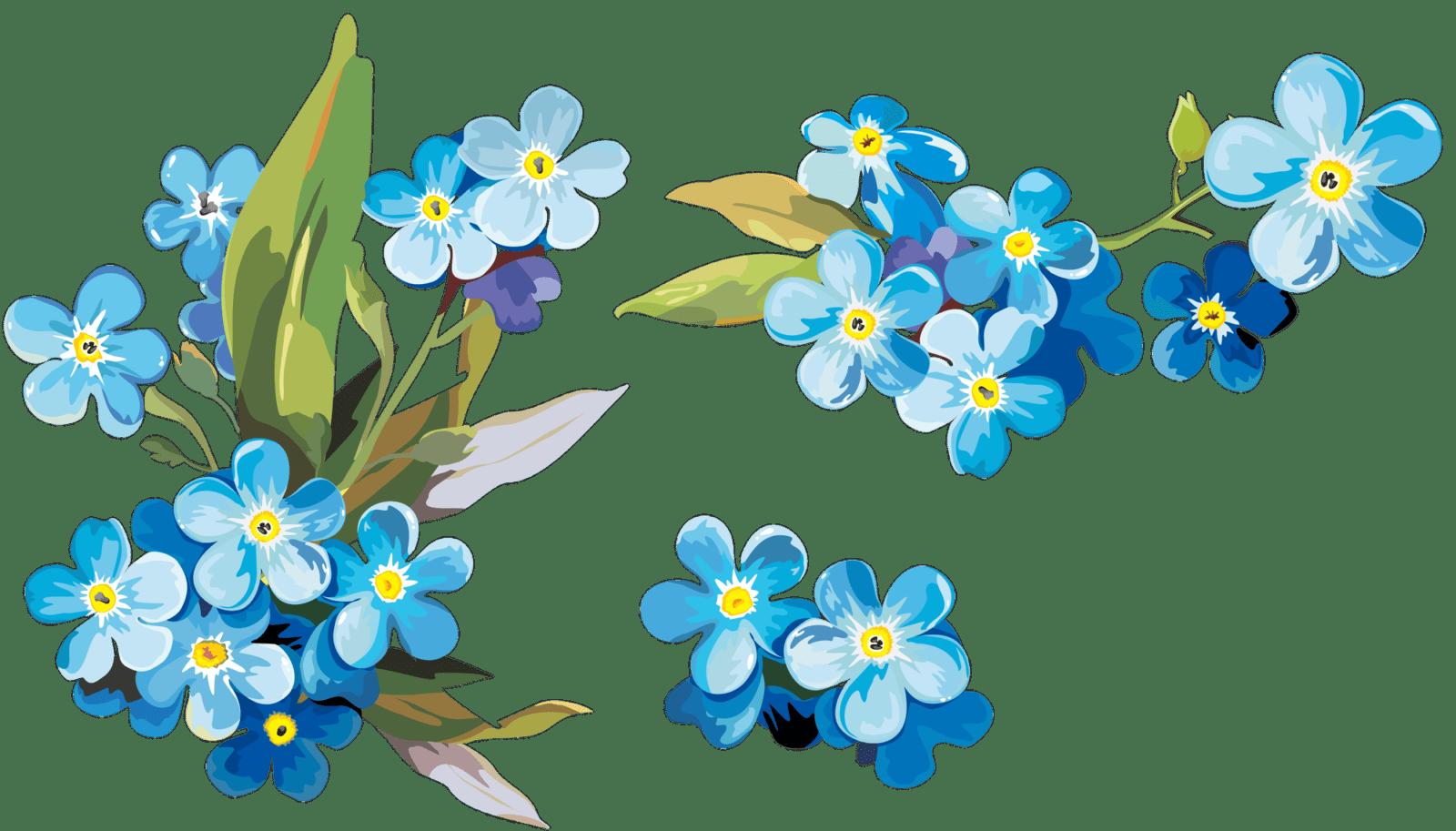 Цветы незабудки   andrey-eltsov.ru
