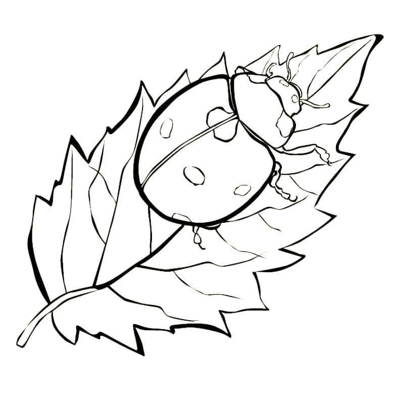 божья коровка на листике