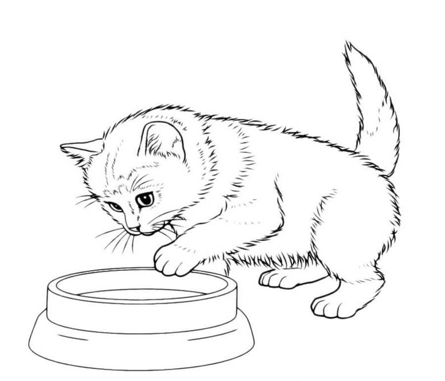 Раскраска кошка 94