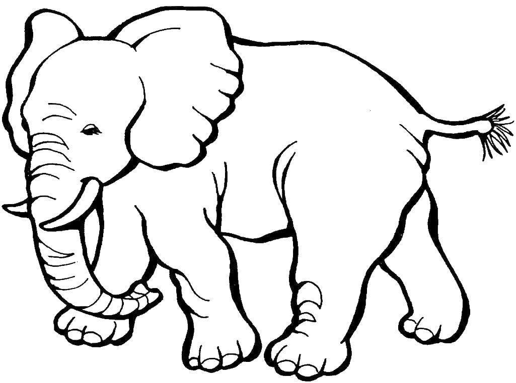 раскраска слон 7