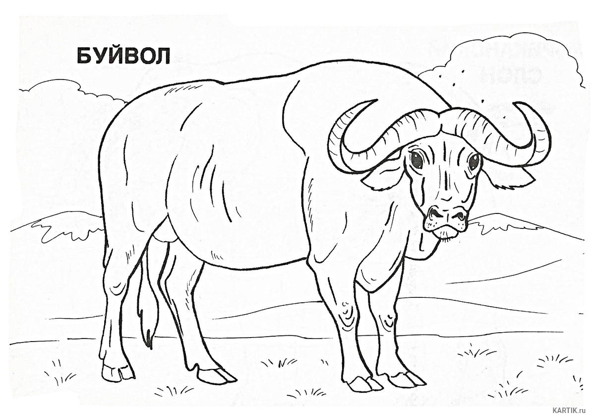 раскраска буйвол 3
