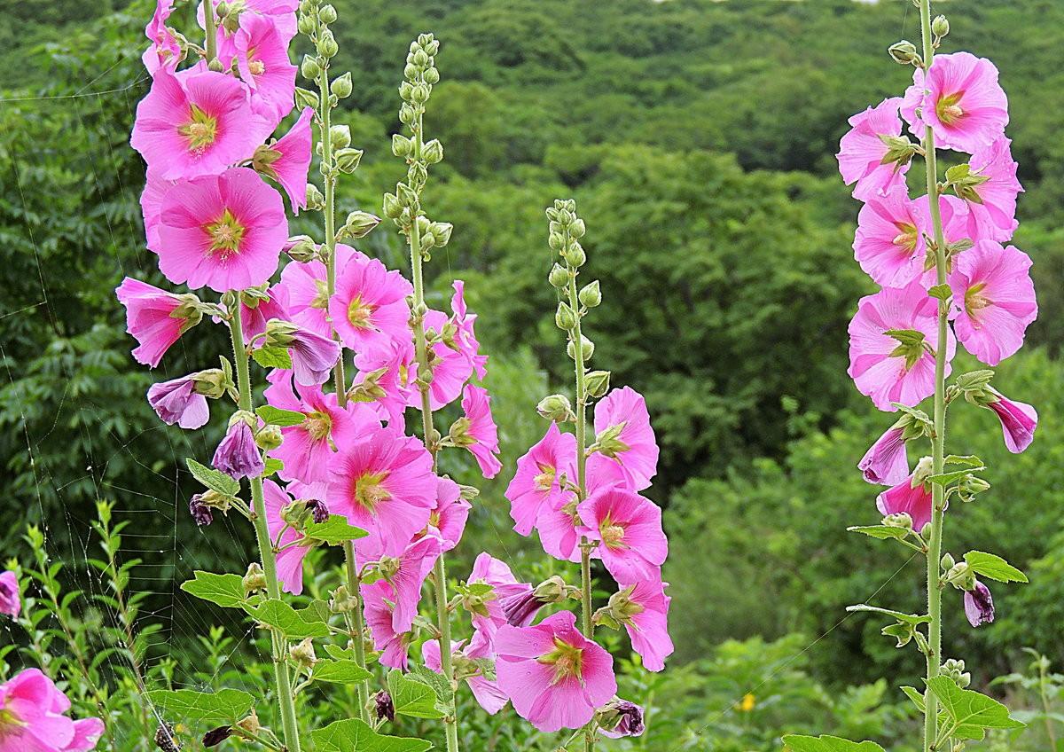 Красивые картинки цветы   andrey-eltsov.ru