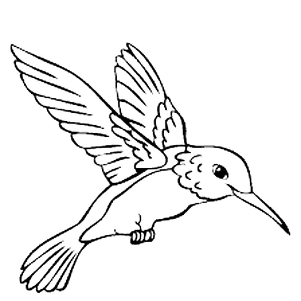 Раскраска колибри