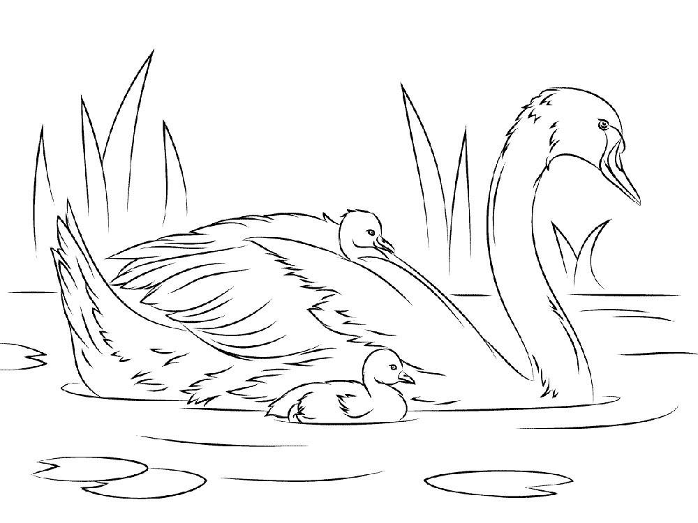 Раскраска лебедь 5