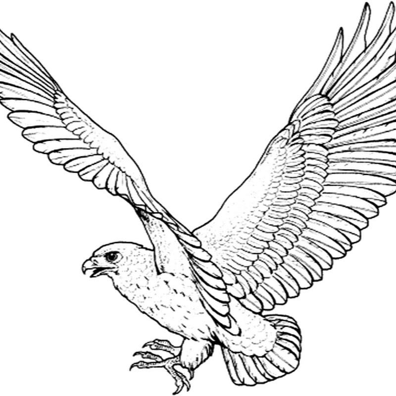 раскраска орёл 2