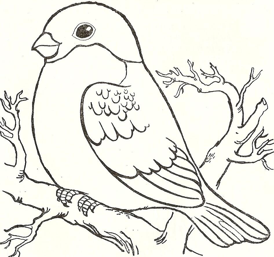 раскраска птицы Andrey Eltsov Ru