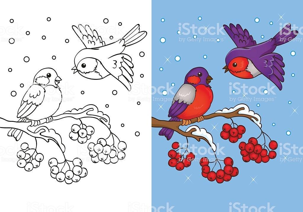 Раскраска снегирь 11