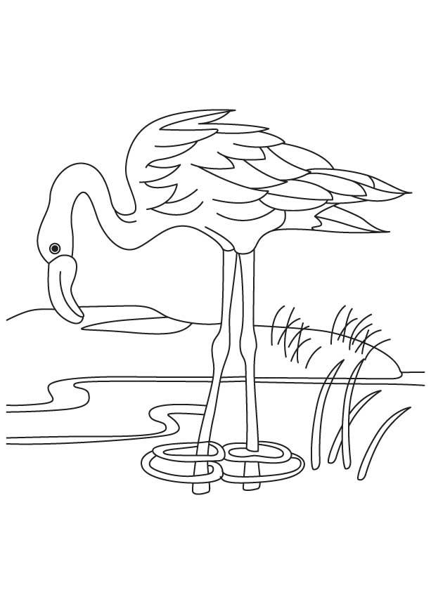 раскраска фламинго 3