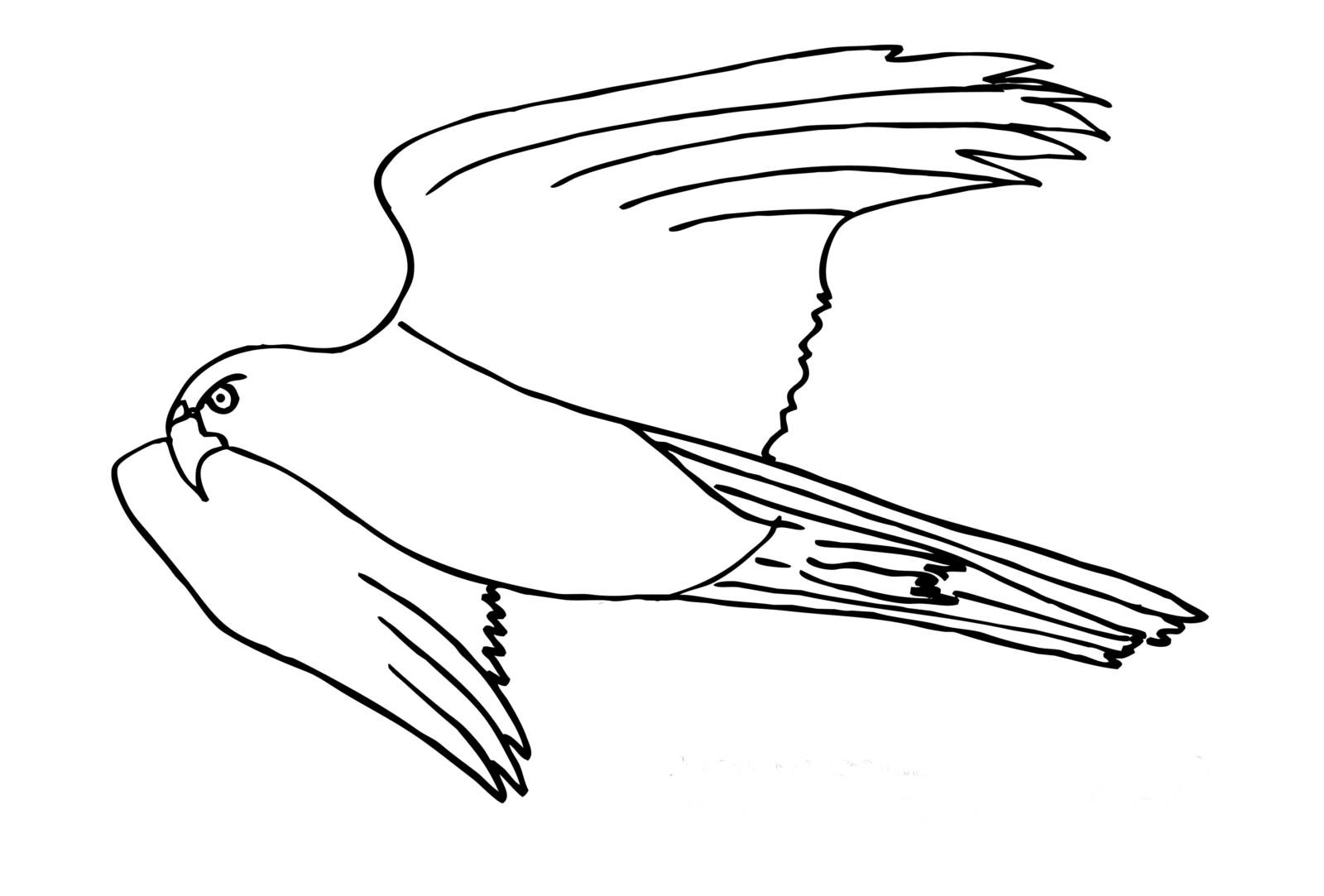 раскраска ястреб 2