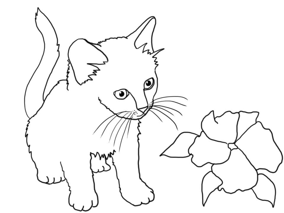 раскраска котёнок 55