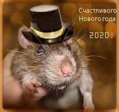 Крыса в шляпе