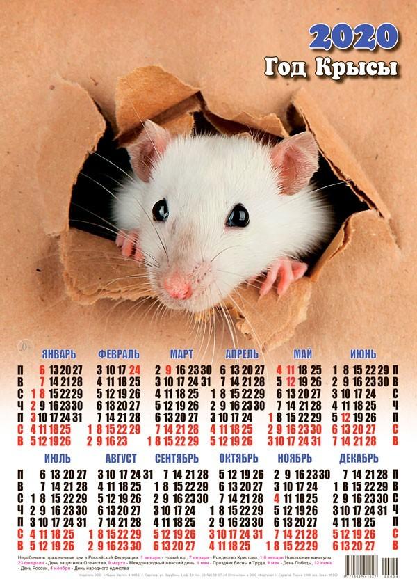 крыса фото 7