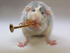Крыса фото 77